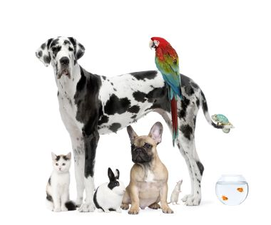 istock_11326822_group-pets